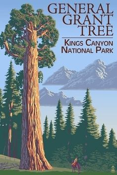 General Grant Tree - Kings Canyon National Park, California - Lantern Press Poster