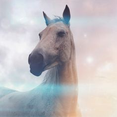 Pearl's Dream - a magical horse photo! A unicorn without the horn