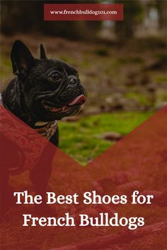 Shoes are a great option for French Bulldogs, as their feet are quite sensitive to heat and cold, and need to be protected. Learn all about French Bulldog shoes and choose the right one for your Frenchie today,  #frenchbulldogshoes #dogaccessories French Bulldog Facts, French Bulldog Puppies, French Bulldogs, Dog Varieties, Dog Boots, Soft Feet, Great Friends, Dog Accessories, Dog Walking