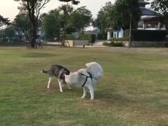 """We know tis is probably the only """"leash free"""" style we can go, they're nvr gonna let us go solo, but as long as we hav each other nothing else matters<br />Credit: rocky_maya_"""