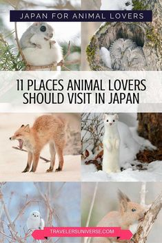 Japan for animal lovers.