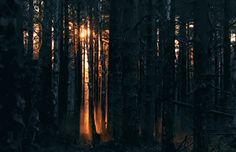 Sundown between the tree boles <3 :)