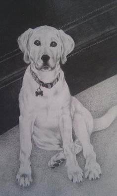 Elvis the dog. My first commission!