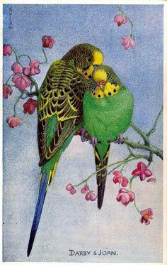 Lot of 6 Parakeet Vintage Valentine's \Lovebird\ Postcards Bird Drawings, Animal Drawings, Watercolor Bird, Watercolor Paintings, Budgies, Parrots, Bird Pictures, Arte Floral, Cute Birds
