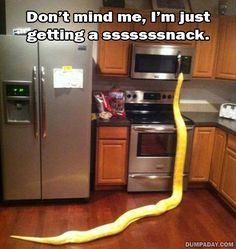 Funny Pictures Of The Day – 48 Pics