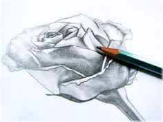 how to draw a rose | how-to-draw-a-rose-picture.jpg