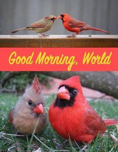 Pretty Birds, Love Birds, Beautiful Birds, Cardinal Birds, Free Hugs, Bird Pictures, Colorful Birds, Pics Art, Nature Animals