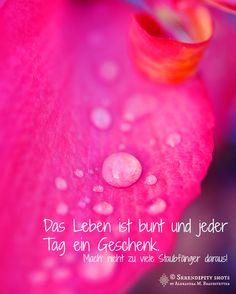 """""""Kleine Nettigkeiten"""" von: www.facebook.com/serendipity.shots Foto und Text: Alexandra M. Brandstetter"""