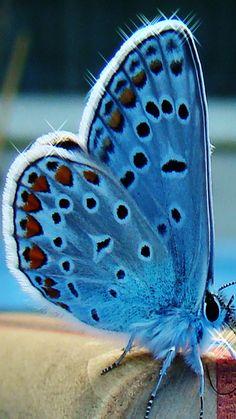Florescent Butterfly
