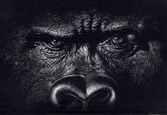 King Kong, in daniel karjadi's My Gallery Comic Art Gallery Room Primates, Bigfoot Photos, Gorilla Tattoo, Pencil Drawings Of Animals, Wild Photography, Monkey Art, Year Of The Monkey, Mountain Gorilla, Elegant Tattoos