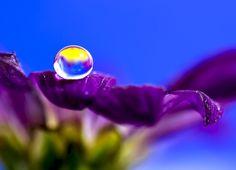 Pretty Purple Flower - Nice Macro !