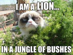 i am a lion - Grumpy Cat
