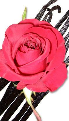 Vanilla Rose Oil