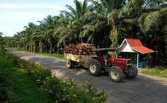 palm fruit on trailer