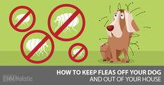 You don& have to expose your dog to toxic flea and tick meds. Here are our best home remedies for keeping fleas out of your home and off of your dog. Home Remedies For Fleas, Flea Remedies, Natural Home Remedies, Bees And Wasps, Pest Control, Bug Control, Flea And Tick, Pet Health, Dog Care