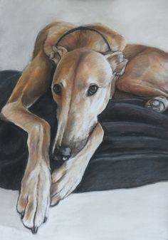 A lovely pastel rendition of our sweet Beauregard, by artist Charlotte Yealey