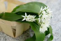 Wild Garlic Recipes:  great ideas for amazingly delicious Ramsom (Allium Ursinum).  The edible frsh leaves are reputed to have even more health benefits than conventional garlic bulbs.
