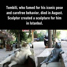 Turkish Cat and his Sculpture Cute Cats, Funny Cats, Animal Tv, Animal Memes, International Cat Day, Owning A Cat, Raining Cats And Dogs, Beautiful Cat Breeds, Cat People