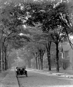 All those beautiful trees! East Avenue South, Photo by Jessie Bell Dixon Hamilton Ontario Canada, Dundas Ontario, Historical Images, The Old Days, Local History, Belgium, Dear God, Excercise, City