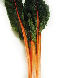 Swiss Chard Orange Fantasia- This is vividly colored chard with intense bright orange stem, veins and deep shiny green, heavily savoy leaves they hold their color well when cooked or use in your salad mix. Delicious in stir- fried, steamed greens, good spinach substitute and stalks can be eaten like celery.