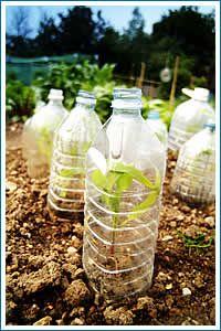 plastic-in-garden  Invernaderos caseros para disponer de algunas plantas de verano en invierno.