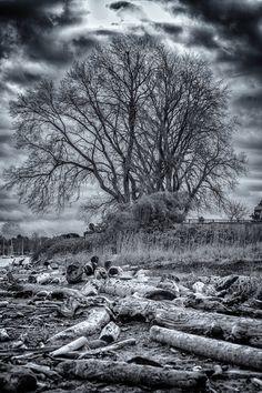 "Photo ""Dark & Ominous Tree"" Taken at Willows Beach ~ Dom #500px http://500px.com/photo/22985305"
