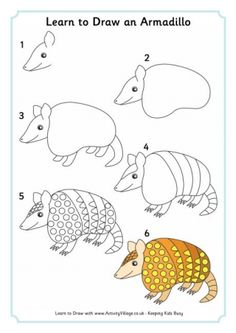 Learn To Draw An Armadillo