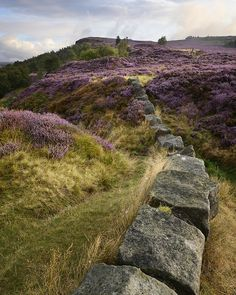 Peak District Pinks (by Russ Barnes Photography)