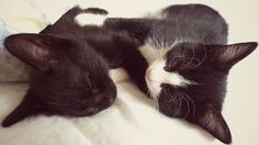 And these two lovable snugglers.