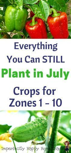 Plant in July - Zones 1-10. Everything You Can Still Plant in Your Vegetable Garden in July on Your Homestead.