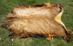 Tanning hides is a skill that extends through the ages, but has been largely forgotten in our modern culture. However, learning how to prepare your own animal skins can open a lot of doors of oppor…