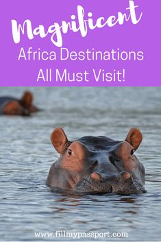 Planning a trip to Africa? Here are six incredible spots to consider that are recommended by travellers. #africatravel #africatraveltips #senegal, #southafrica #namibia #traveltips #mauritius #morocco
