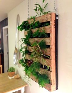 Finished DIY living wall crafted from a shipping pallet