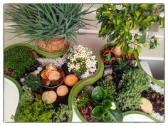 My miniature garden. I love it!