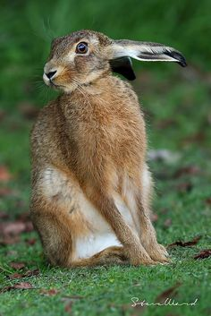 Felt Animals, Animals And Pets, Baby Animals, Cute Animals, Hare Pictures, Animal Pictures, Beautiful Creatures, Animals Beautiful, Photo Animaliere