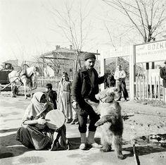 1953 senesinde Mecidiyeköy ve ayı oynatıcıları