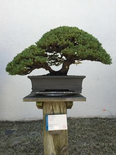 National Bonsai and Penjing Museum - Album on Imgur