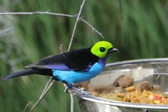 Beautiful Bird in the Hummingbird Haven, San Diego Zoo  |  2929 Zoo Drive, San Diego, CA