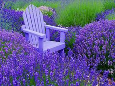 my dream reading spot!