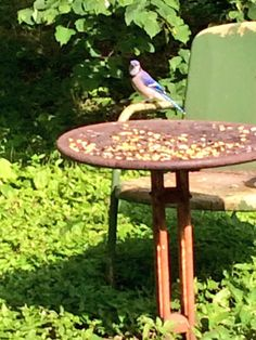 Feeding the beautiful Jay while on tour in Nebraska.