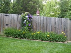 Side fence with 'Stella D' Oro' daylily and two un-named varieties of clematis on the small trellis (will need a much bigger trellis next year)