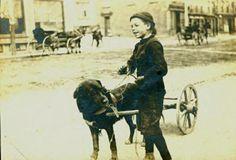 carting St. John's water dog