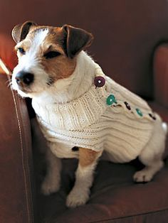 1000+ images about Knit - for Pets on Pinterest Dog ...