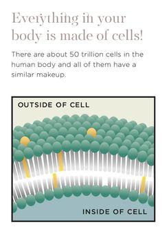 Human Body, Healing, Makeup, Beauty, Beleza, Make Up, The Human Body, Cosmetology, Therapy