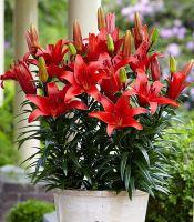BLUSHING JOY Garden Plants, Indoor Plants, Colorful Flowers, Beautiful Flowers, Citrus Oil, Parts Of A Plant, Top Soil, Neem Oil, Organic Fertilizer