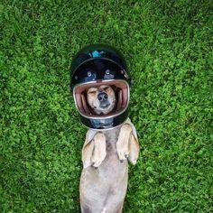 perro-maddie-viajes-moto-theron-humphrey-2