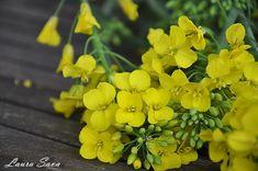 Revani, prajitura cu gris insiropata | Retete culinare cu Laura Sava - Cele mai bune retete pentru intreaga familie Mai, Plants, Planters, Plant, Planting