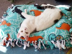 One step beyond a no sew blanket is a pet bed! My cats are getting these tomorrow.