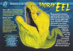 Name: Moray Eel Category: Monsters of the Deep Card Number: 24 Front: Moray Eel Monsters of the Deep Card 24 front Back: Moray Eel Monsters of the Deep Card 24 back Trading Card: Monster Book Of Monsters, Dangerous Animals, Underwater Creatures, Wild Creatures, Animal Facts, Pet Birds, Animals Beautiful, Animals And Pets, Marine Biology