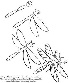 How to Draw Insects
